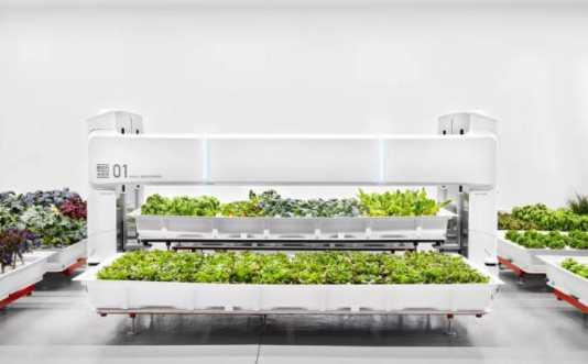 国外一家初创公司另辟蹊径,通过机器人养殖蔬菜获得成功